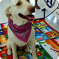 Adopt A Pet :: Kelsey - Coppell, TX