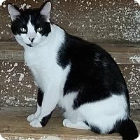 Adopt A Pet :: Dahlia - McKinney, TX