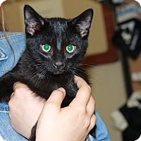 Adopt A Pet :: Sebastian - Rochester, MN