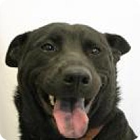 Adopt A Pet :: Nina - Huachuca City, AZ