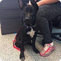 Adopt A Pet :: Mavis - Elgin, IL