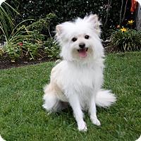 Adopt A Pet :: FRANCIS - Newport Beach, CA