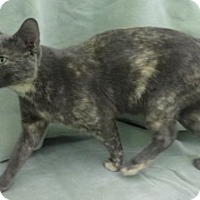 Adopt A Pet :: Spice - Olive Branch, MS