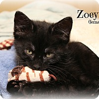 Adopt A Pet :: Zoey - Glen Mills, PA