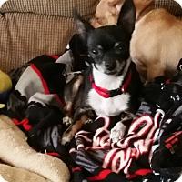 Adopt A Pet :: Letty - Grand Rapids, MI