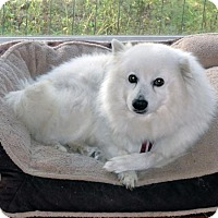 Adopt A Pet :: Barnaby Jones of Tallahassee, FL - Bradenton, FL