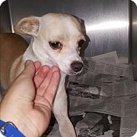 Adopt A Pet :: Julie - Brownsville, TX