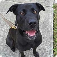 Adopt A Pet :: Meeka - Satellite Beach, FL