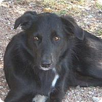 Adopt A Pet :: Thelma Lou - Buchanan Dam, TX