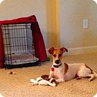 Adopt A Pet :: Candy - St Simons, GA