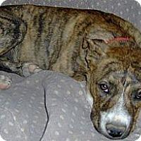 Adopt A Pet :: Mary-Kate - Golden Valley, AZ