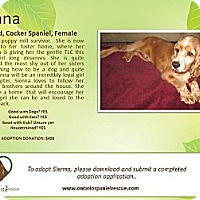 Adopt A Pet :: Sienna - Ottawa, ON