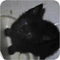 Adopt A Pet :: Beth's spring Litter - Richfield, OH