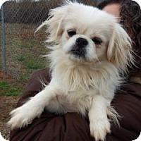 Adopt A Pet :: Ling Ling - Athens, GA