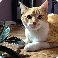 Adopt A Pet :: Austin - Monroe, GA