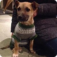 Adopt A Pet :: Balian - Saskatoon, SK