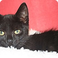 Adopt A Pet :: GRACE - SILVER SPRING, MD