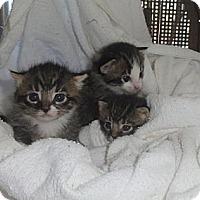 Adopt A Pet :: Lucky - Barnegat, NJ