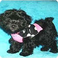 Adopt A Pet :: Ophelia - Mooy, AL