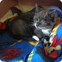 Adopt A Pet :: Blinkey - Island Park, NY