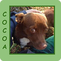 Adopt A Pet :: COCOA - Dallas, NC