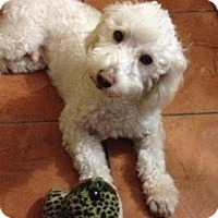 Adopt A Pet :: Soni - San Diego, CA
