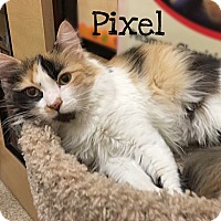 Adopt A Pet :: Pixel - Foothill Ranch, CA