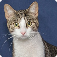 Adopt A Pet :: Oliver - Elmwood Park, NJ