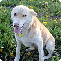 Adopt A Pet :: Elda - Westminster, CO