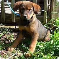 Adopt A Pet :: Bonner - Bedminster, NJ