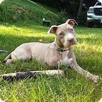 Adopt A Pet :: Tanner - Sacramento, CA