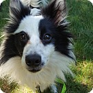 Adopt A Pet :: Bandit