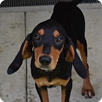 Adopt A Pet :: AnnaBelle - Doylestown, PA