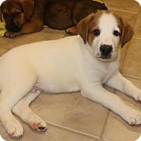 Adopt A Pet :: Pauli - Union, CT