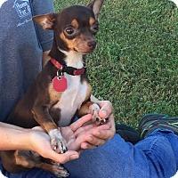 Adopt A Pet :: BUGSY - Phoenix, AZ
