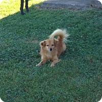 Adopt A Pet :: Rusty - Clear Brook, VA