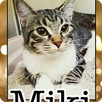 Adopt A Pet :: Miki - Edwards AFB, CA
