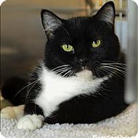 Adopt A Pet :: Palindrome - Sherwood, OR