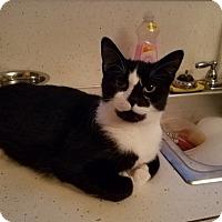 Adopt A Pet :: Champ - Toledo, OH