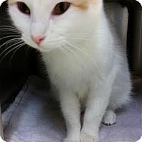 Adopt A Pet :: Lila - Chippewa Falls, WI