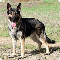 Adopt A Pet :: Rollo - San Diego, CA