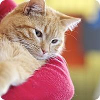 Adopt A Pet :: Kirby - LaGrange, KY