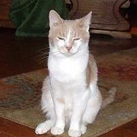 Adopt A Pet :: CERARIO - Acme, PA