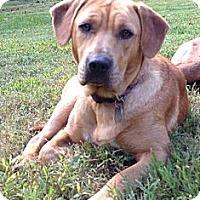 Adopt A Pet :: Abby - West Bridgewater, MA