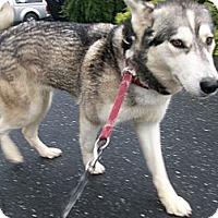 Adopt A Pet :: Malory - Augusta County, VA