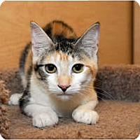Adopt A Pet :: Cali - Farmingdale, NY