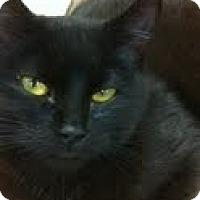 Adopt A Pet :: Ebby - Modesto, CA
