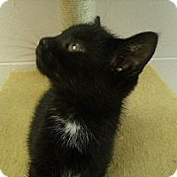 Adopt A Pet :: Shadow - Gadsden, AL