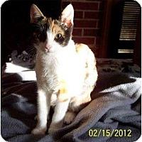 Adopt A Pet :: Pipsqeak - Summerville, SC
