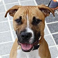 Adopt A Pet :: Dusty - Richmond, VA